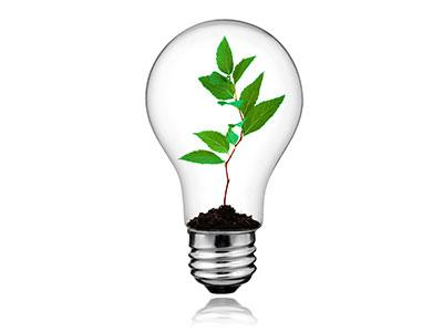 Performance Contract Lightbulb Plant